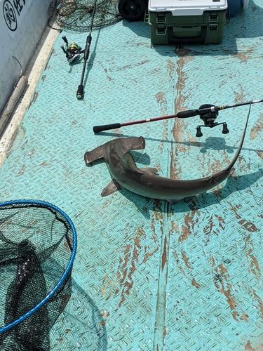 ハンマーヘッドシャークの釣果