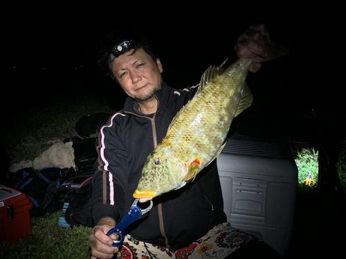 ムネアカクチビの釣果
