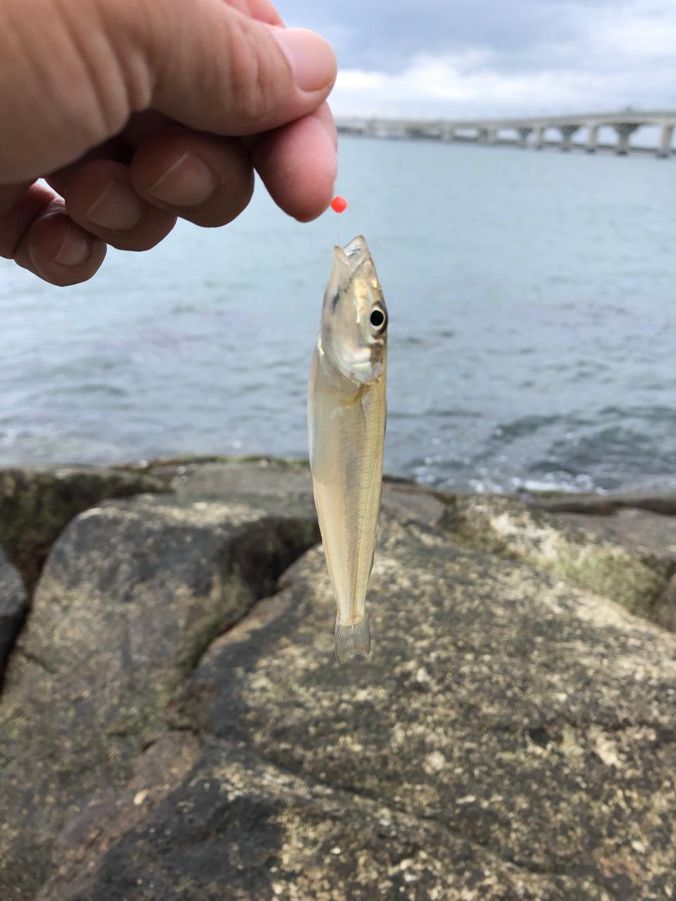 護岸 りんくう 釣り