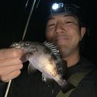 釣りキチ隼平の釣果