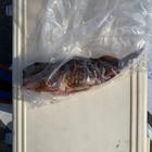 釣り人のjpの釣果