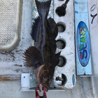 ワカメ専門の釣果