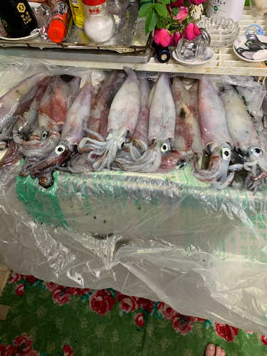 ケンサキイカの釣果