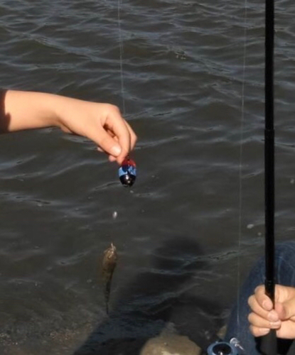 ヌマチチブの釣果