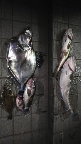 カガミダイの釣果