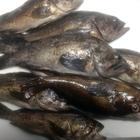 浅利七海の釣果