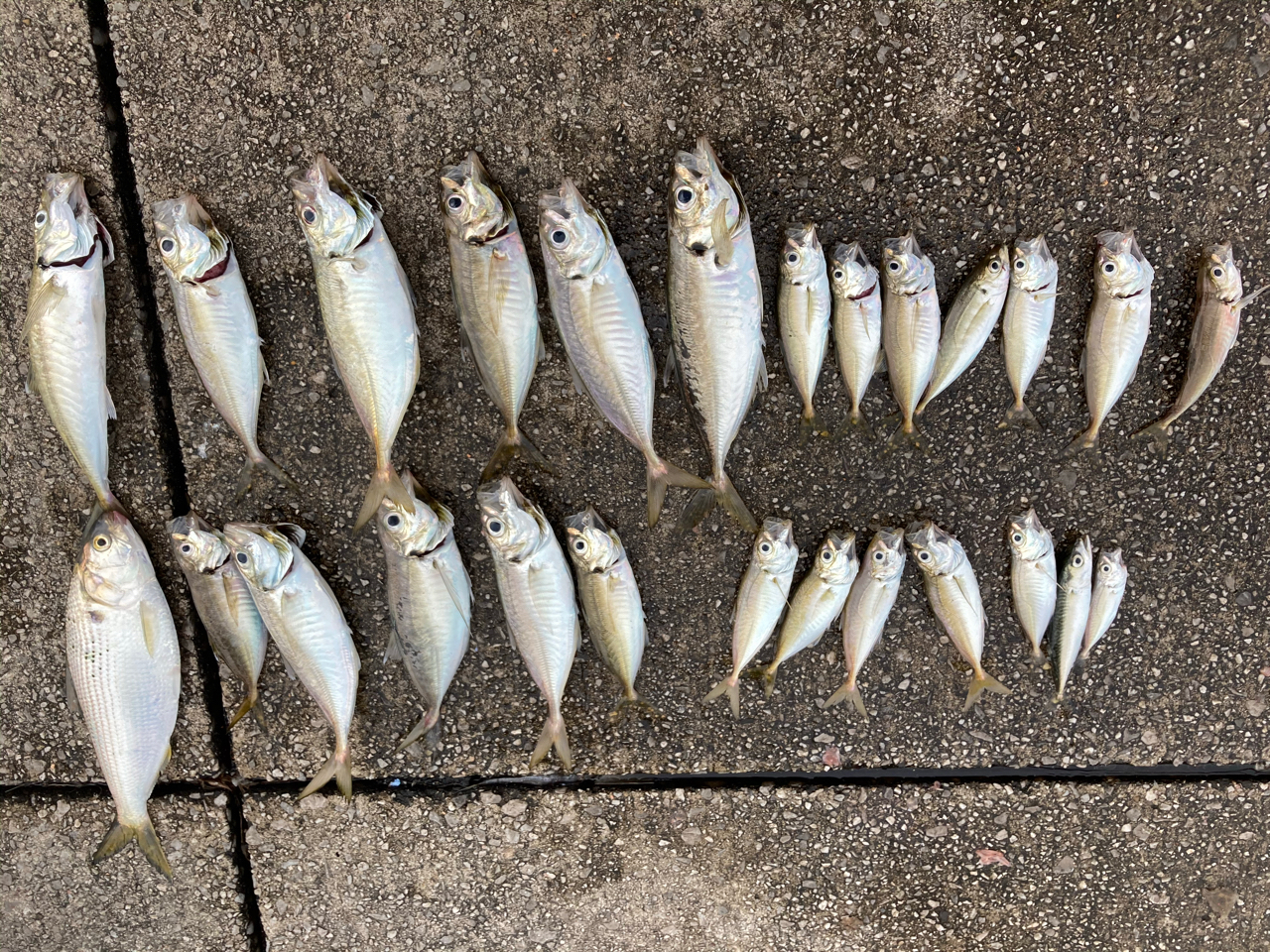 東扇島 西 公園 釣果 東扇島西公園の釣り情報まとめ!釣果や釣れるポイント、駐車場情報ま...