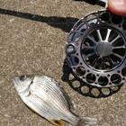 スーパーライトヘチ釣り師(一将)の釣果