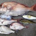 月曜漁師の釣果