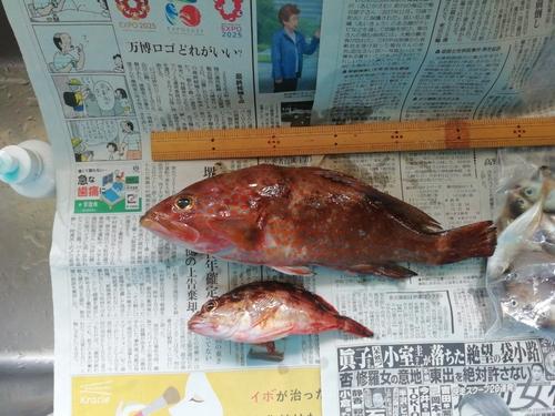舞鶴田井漁港