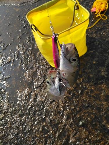 南港魚つり公園