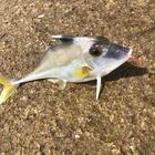 monokumaの釣果