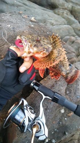 オニカサゴの釣果