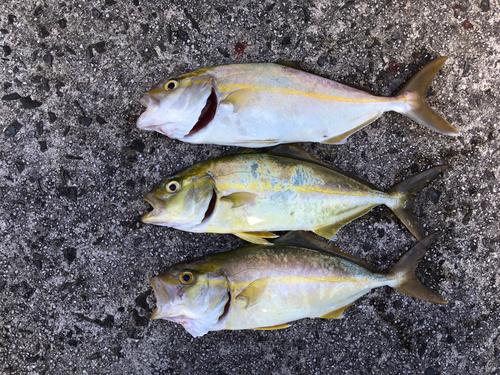 ネリゴの釣果