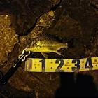 ボグナー123の釣果