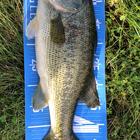 琵琶湖の三平の釣果