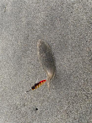 大倉戸海岸