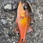 エコ釣人の釣果
