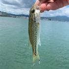バスマニアの釣果