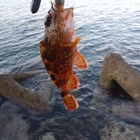 海を求める岐阜県民の釣果