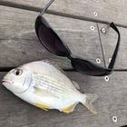 ゴシック釣り師ノスフェラトゥの釣果