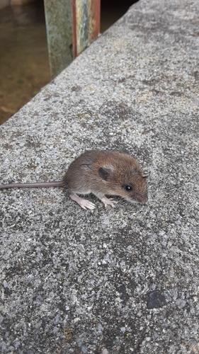 スモールマウスバス