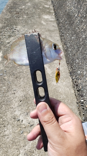 チャリコの釣果