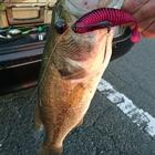 FISH-ON トシの釣果