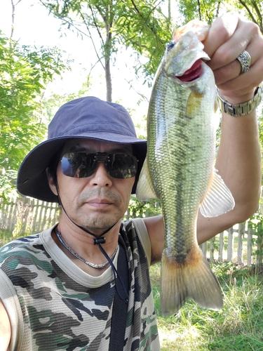 南大阪野池群