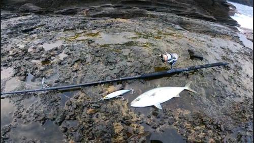 フクラギの釣果