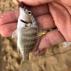 釣りキチてつの釣果