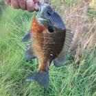 最寄り池まで徒歩2分の釣果