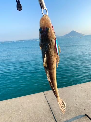 イネゴチの釣果