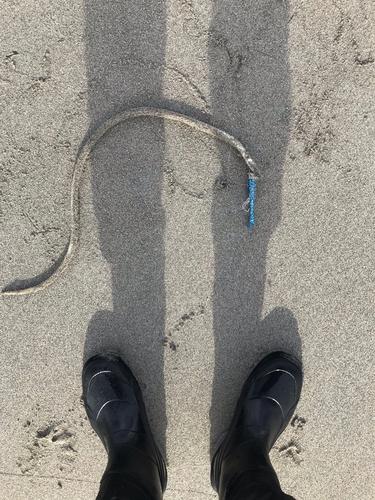 ウミヘビの釣果