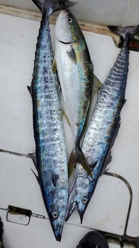 オキサワラの釣果