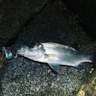 minasoraパパの釣果