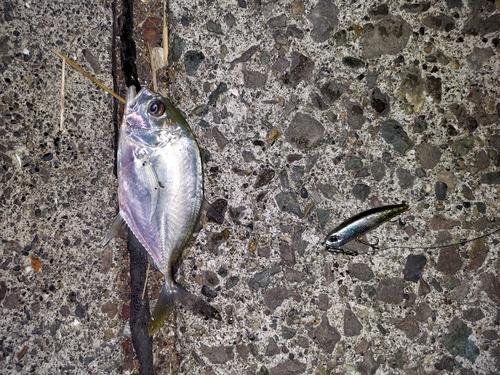 メッキの釣果