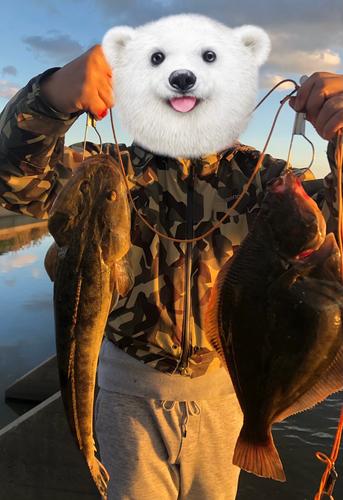 カレイの釣果