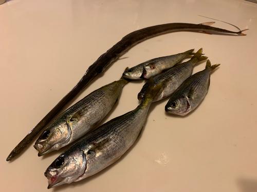 タカベの釣果