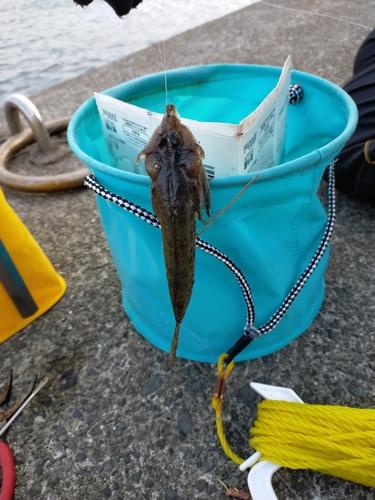 ネズミゴチの釣果
