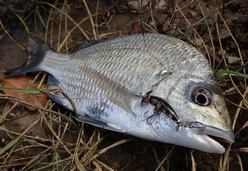 ナンヨウチヌの釣果