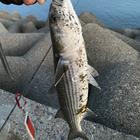 大漁丸の釣果