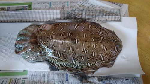 モンゴウイカの釣果