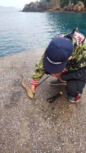 ウツボの釣果