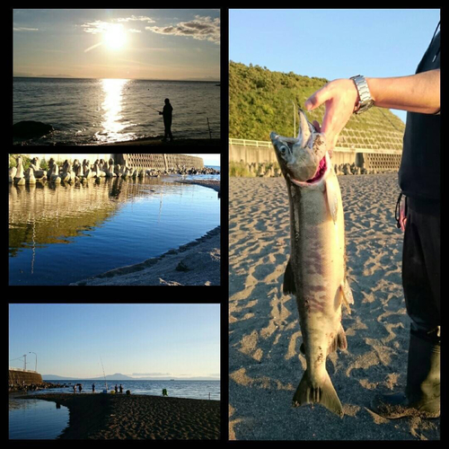 アキアジの釣果