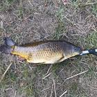 釣り好きの少年の釣果
