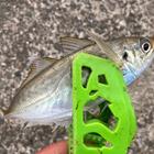 釣り大好き(アジ)の釣果