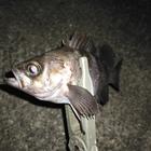 FishingUzの釣果