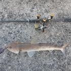 釣りKINGの釣果