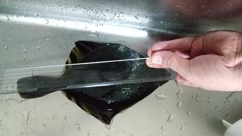 カワガレイの釣果